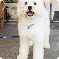 Adopt A Pet :: Mooshie (Cuddler!) - Santa Monica, CA