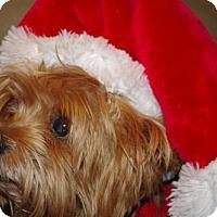 Adopt A Pet :: Parker - Longview, WA