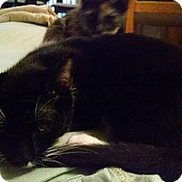 Adopt A Pet :: Lucy Pevensie - Tampa, FL