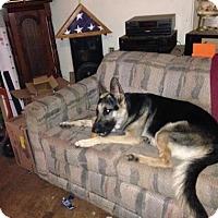 Adopt A Pet :: Zeus - Warsaw, IN