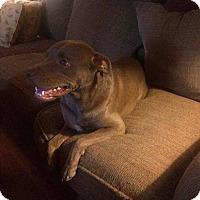 Adopt A Pet :: Ginger - Acworth, GA