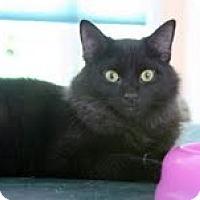 Adopt A Pet :: Lucas - Arlington, VA