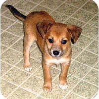 Adopt A Pet :: Necedah - Novi, MI