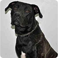Adopt A Pet :: Fiona - Port Washington, NY