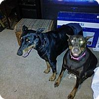 Adopt A Pet :: Kali - Allegan, MI