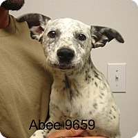 Adopt A Pet :: Abee - baltimore, MD