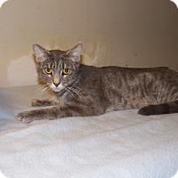 Adopt A Pet :: Luna - Benton, PA