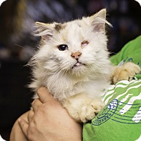 Adopt A Pet :: Zinnia - Fredericksburg, VA