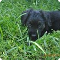 Adopt A Pet :: Kona - Marlton, NJ