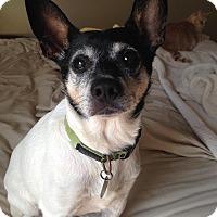 Adopt A Pet :: Jericho - Homewood, AL