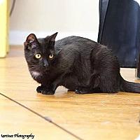 Adopt A Pet :: Minnow - Marietta, GA