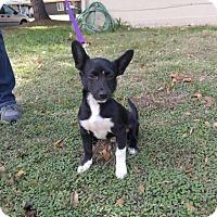Adopt A Pet :: Alexander - Lodi, CA