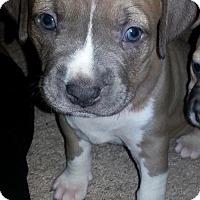 Adopt A Pet :: Sydney - Mayer, MN