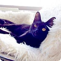 Adopt A Pet :: Leilani - Oakland, CA