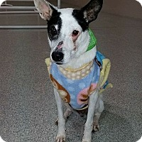 Adopt A Pet :: Clementine - Calgary, AB