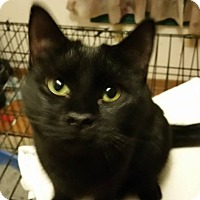 Adopt A Pet :: Poppy - Rockford, IL