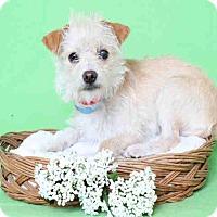 Adopt A Pet :: Reina - Encino, CA