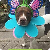Adopt A Pet :: Marigold - Little Rock, AR