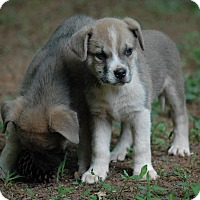 Adopt A Pet :: Daphne - Lawrenceville, GA