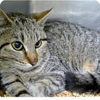 Adopt A Pet :: Diego - Springdale, AR