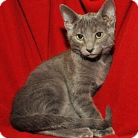 Adopt A Pet :: Cole - Garland, TX
