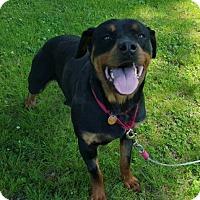 Adopt A Pet :: Wonka - Frederick, PA
