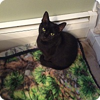 Adopt A Pet :: Carly - Plainville, MA