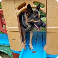 Adopt A Pet :: Zeke - Louisville, KY