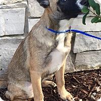 Adopt A Pet :: Becca - Oswego, IL