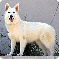 Adopt A Pet :: Crystal - Downey, CA