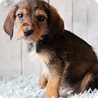 Adopt A Pet :: Dublin - Waldorf, MD