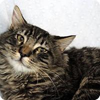 Adopt A Pet :: Soba - San Jose, CA