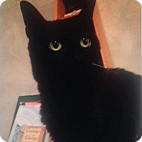 Domestic Shorthair Cat for adoption in Baltimore, Maryland - SLICKY - COURTESY POST