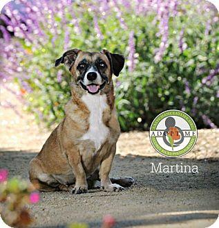Corgi Mix Dog for adoption in Oceanside, California - Martina