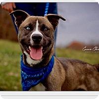 Adopt A Pet :: Guy - Urgent! - Zanesville, OH