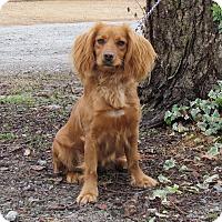 Adopt A Pet :: AUTUMN - Bedminster, NJ
