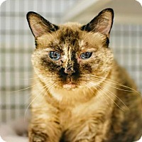 Adopt A Pet :: Freckles - Denver, CO