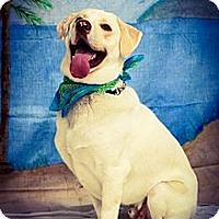 Adopt A Pet :: Goofy - Princeton, KY