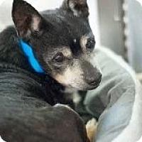 Adopt A Pet :: Walter - Las Vegas, NV