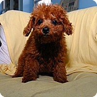 Adopt A Pet :: Brooklyn - New York, NY