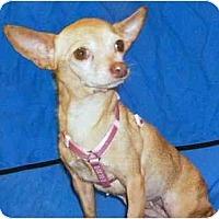 Adopt A Pet :: Georgia - Mooy, AL