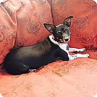 Adopt A Pet :: Thelma - Nanuet, NY
