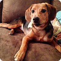 Adopt A Pet :: Lily - Homewood, AL