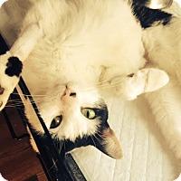 Adopt A Pet :: Hudson - Brooklyn, NY