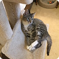 Adopt A Pet :: ARYA aka RACY - Hamilton, NJ