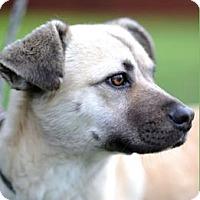 Adopt A Pet :: Yoshi - Sunnyvale, CA