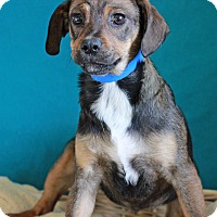 Adopt A Pet :: Kevin - Waldorf, MD