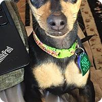 Adopt A Pet :: Abbey - Tustin, CA