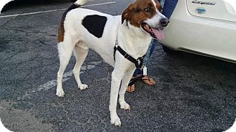 Foxhound Mix Dog for adoption in Richmond, Virginia - Peanut