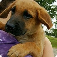 Adopt A Pet :: YOSHI-ADOPTION PENDING - East Windsor, CT
